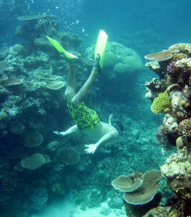 Great Barrier Reef - Cairns, Queensland