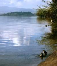 travel, destinations, photography, culture, facts, New Zealand, Kiwi, Rotorua Lake